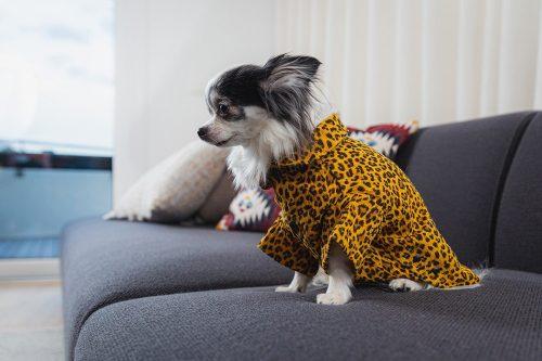 Oblacila za pse Pancho chihuahua pasja pizama leopard