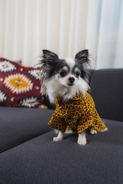 Oblacila za pse Pancho chihuahua pasja pizama leopard 1