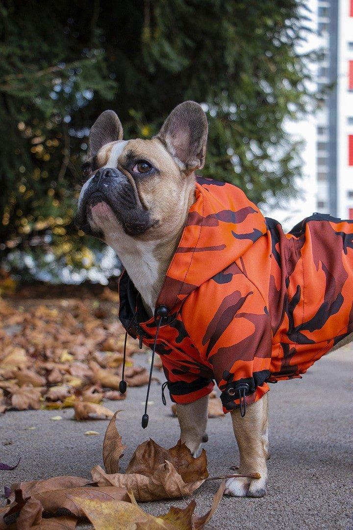 Oblačilo za pse dežni plašček Frajer Francoski buldog Pancho