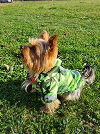 Mnenje Pancho oblačilo za pse dežni plašček zaslužkar