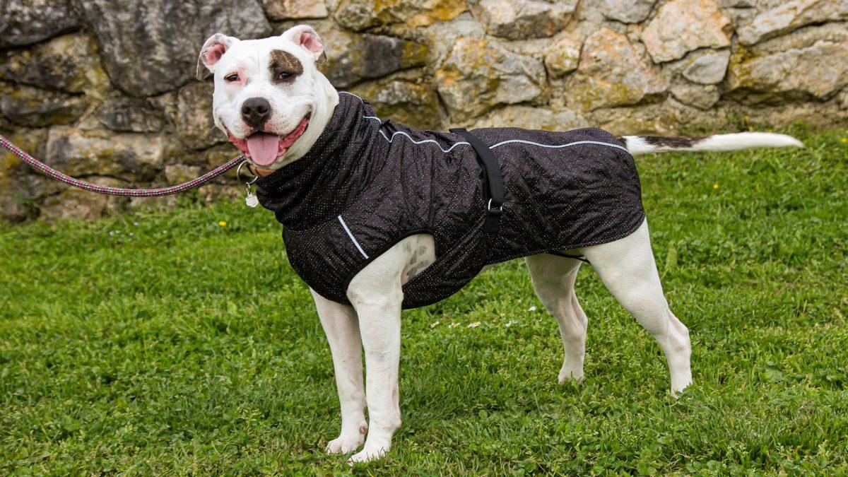 Oblačilo za pse dežni plašček veliki Kozmos 4