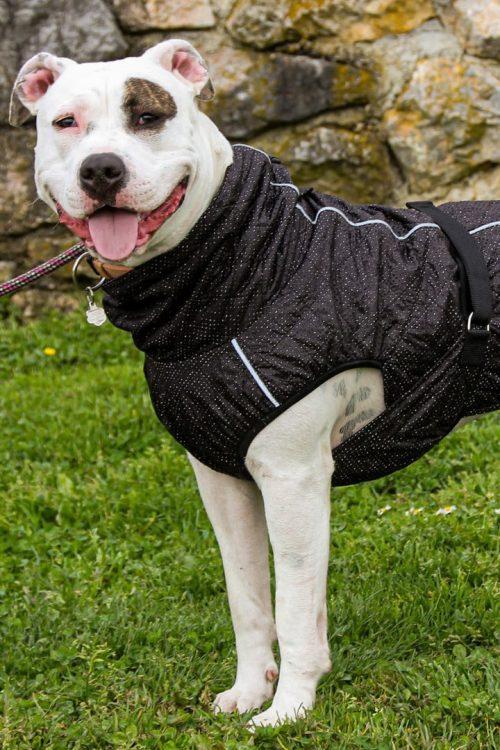 Dežni plašč veliki kozmos Pancho oblačila za pse