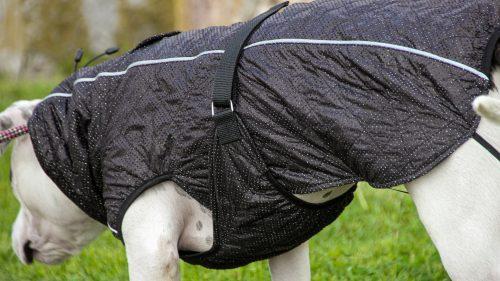 Oblačilo za pse dežni plašček veliki Kozmos 3