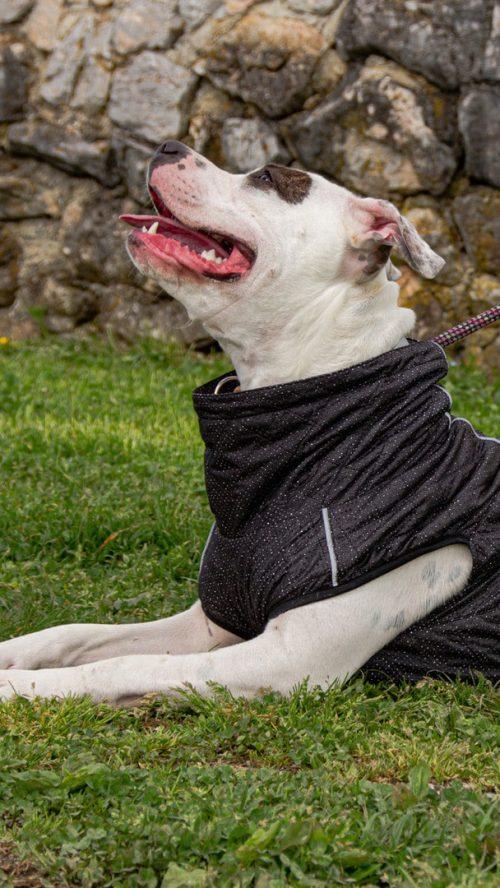 Oblačilo za pse dežni plašček veliki Kozmos 1