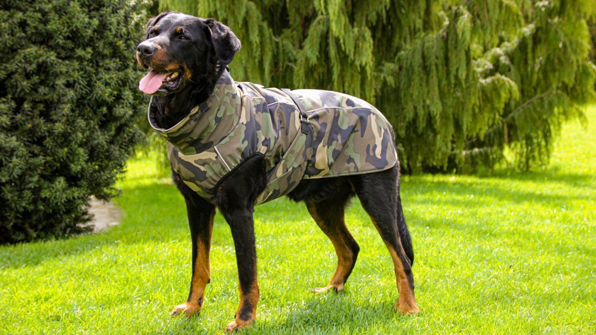 Oblačilo za pse dežni plašček veliki Vojašček 4 Gary Beauceron