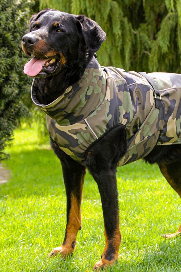 Dežni plašč za pse Pancho beauceron