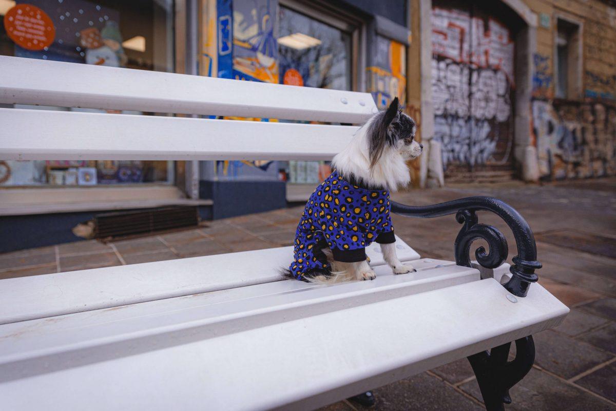 Oblačilo za pse Pancho chihuahua pasja obleka Močerad črn 1