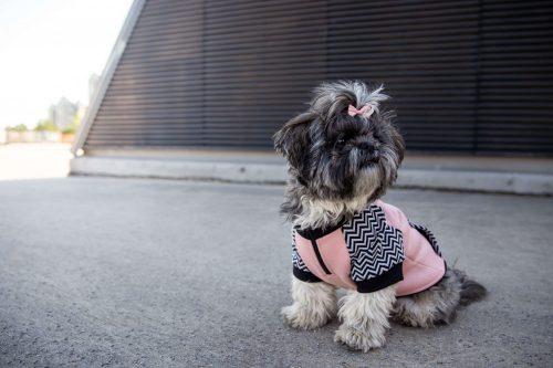 Oblačilo za pse Pancho pasja obleka pav 2
