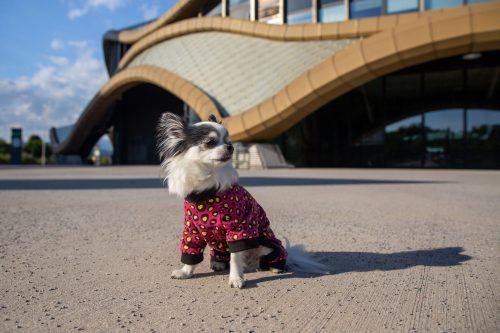 Oblačilo za pse Pancho pasja obleka Metulj črn 1