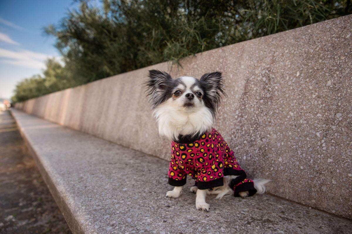Oblačilo za pse Pancho pasja obleka Metulj črn