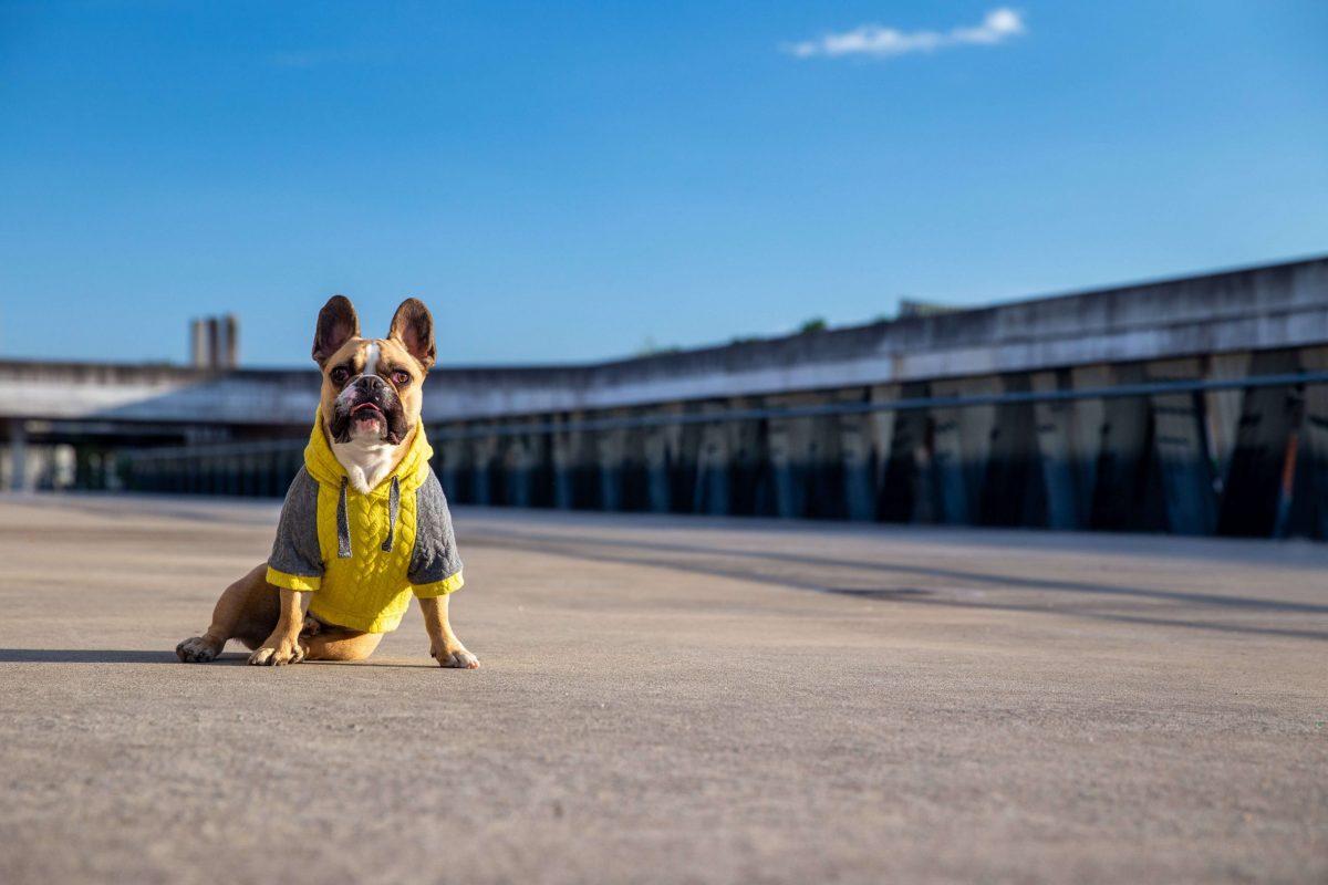 Oblačilo za pse Pancho francoski buldog pasja obleka Kapucar rumen