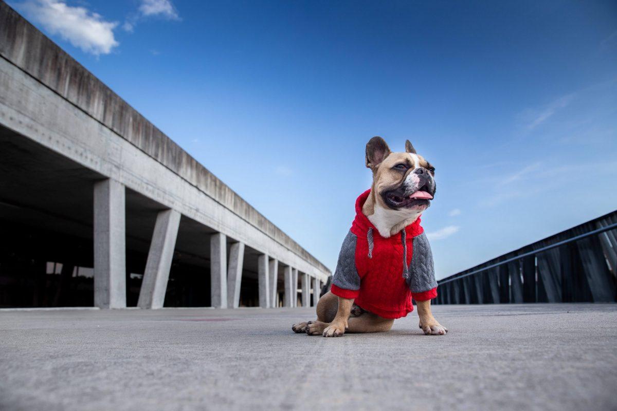 Oblačilo za pse Pancho francoski buldog pasja obleka Kapucar rdeč 1
