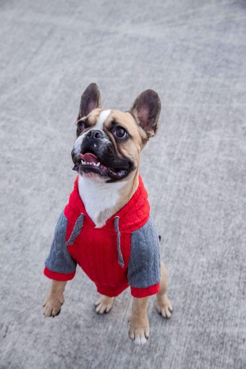 Oblačilo za pse Pancho francoski buldog pasja obleka Kapucar rdeč
