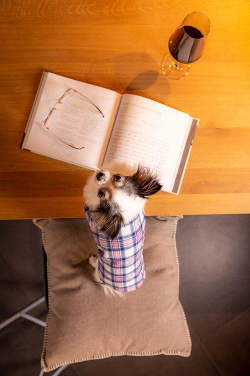 Oblačilo za pse Pancho chihuahua pasja obleka pizama Karo