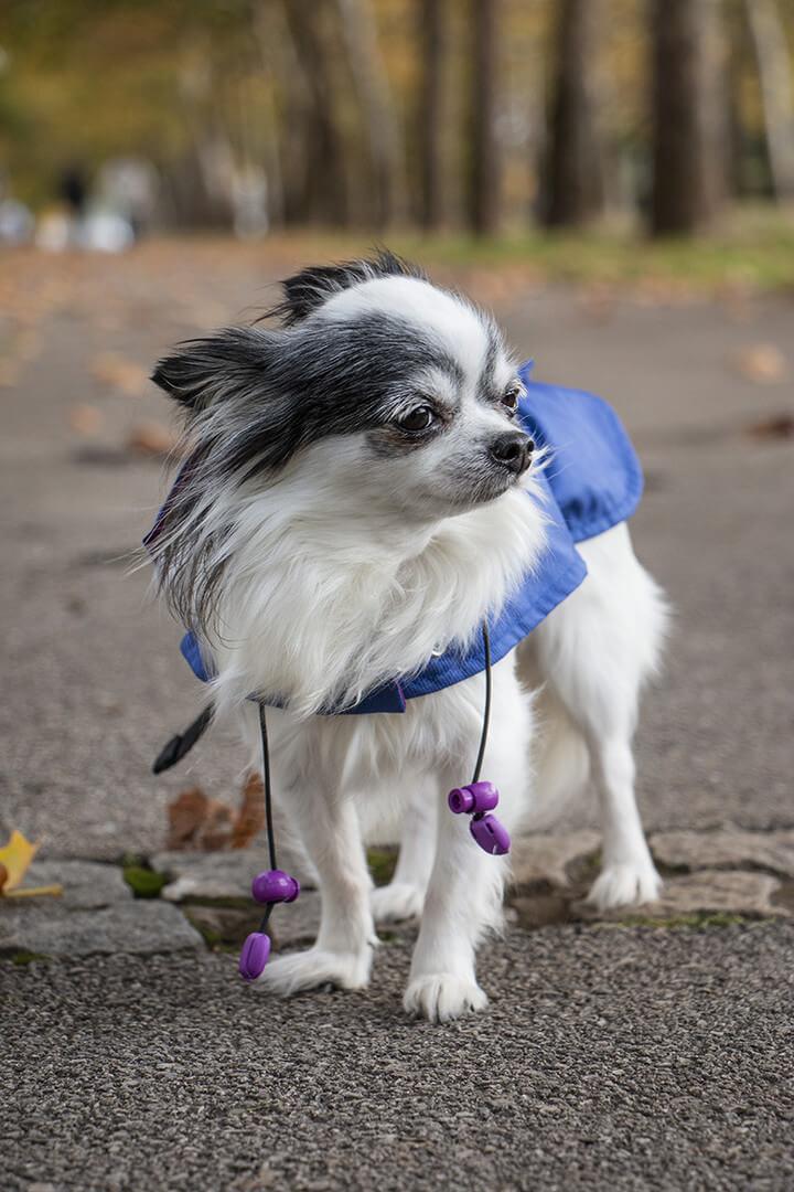 Oblacila za pse Pancho dezni plascek kraljevo velicanstvo chihuahua Pancho
