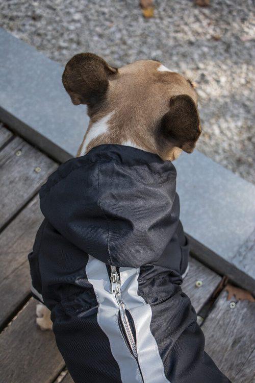 Oblacila za pse Pancho dezni plascek netopirko francoski buldog Pancho 1