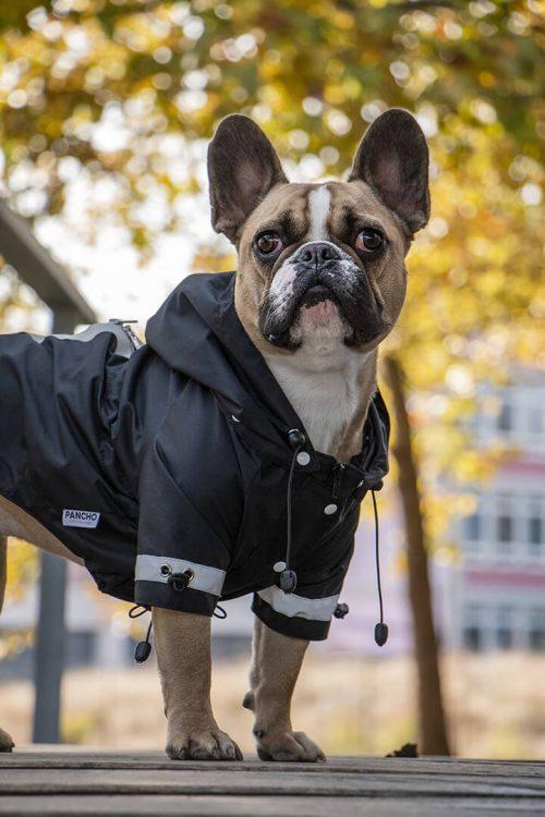 Oblacila za pse Pancho dezni plascek netopirko francoski buldog Pancho