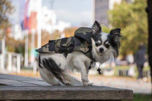 Oblacila za pse Pancho dezni chihuahua plascek Vojašček 2