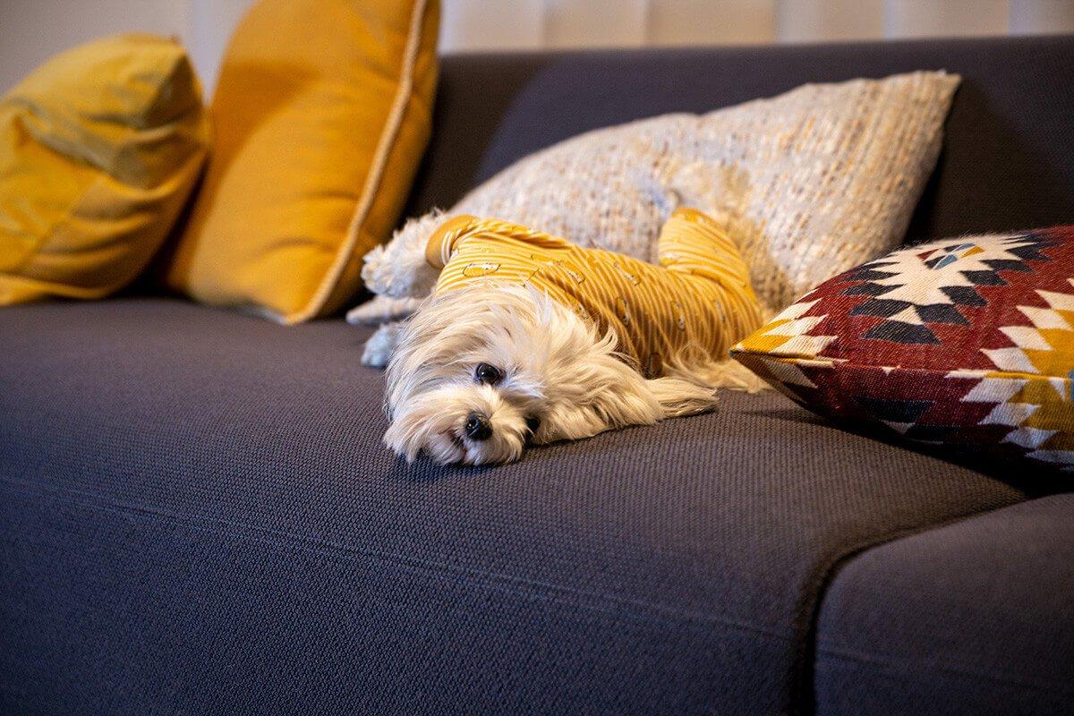 Oblačilo za pse Pancho mesancek pasja obleka jezek