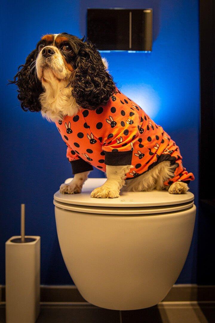 Oblačilo za pse Pancho cavalier king charles spanjel pasja obleka zajcek