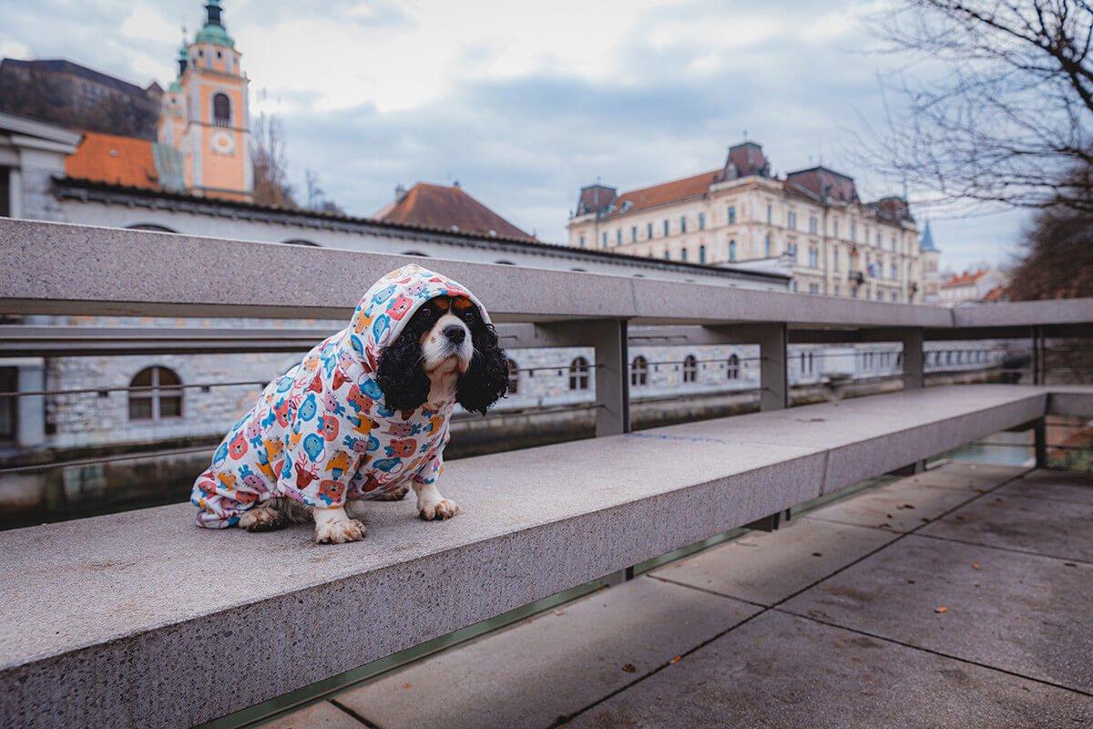 Oblačilo za pse Pancho cavalier king charles pasja obleka Zverina