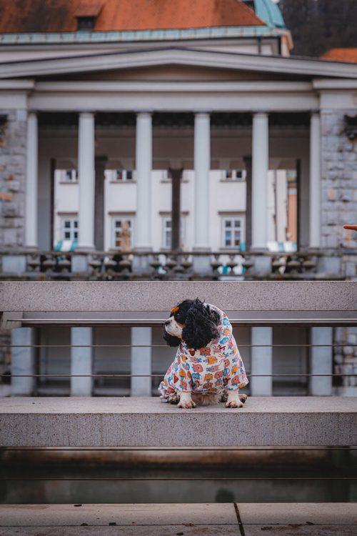 Oblačilo za pse Pancho cavalier king charles pasja obleka Zverina 1