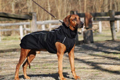 oblacila za pse Pancho Rhodesian ridgeback pasji dezni plasc veliki sef 1