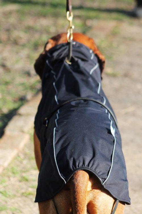 oblacila za pse Pancho Rhodesian ridgeback pasji dezni plasc