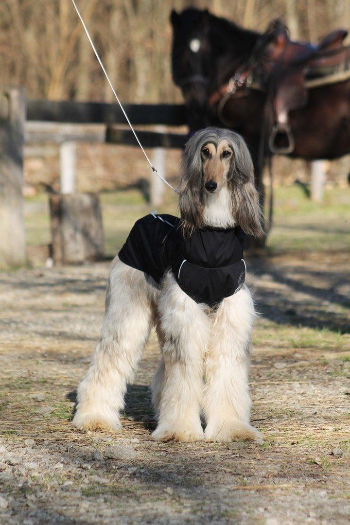 oblacila za pse Pancho afganistanski hrt pasji dezni plasc veliki sef