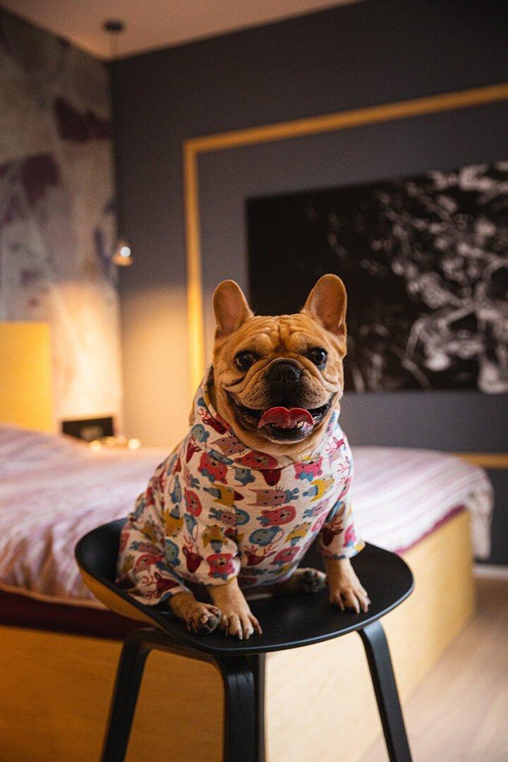 Oblačilo za pse Pancho francoski buldog pasja obleka Zverina 1