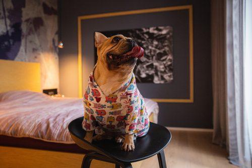 Oblačilo za pse Pancho francoski buldog pasja obleka Zverina