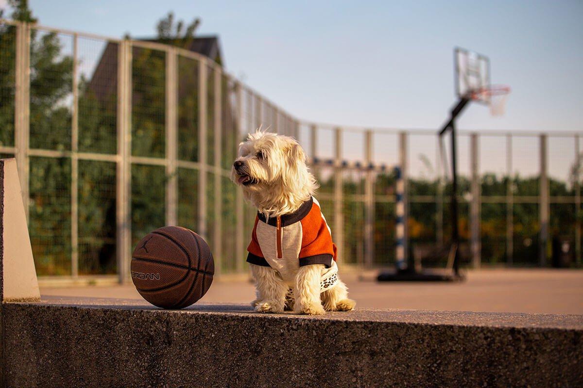 Oblačilo za pse Pancho maltezan pasja obleka Ris 2
