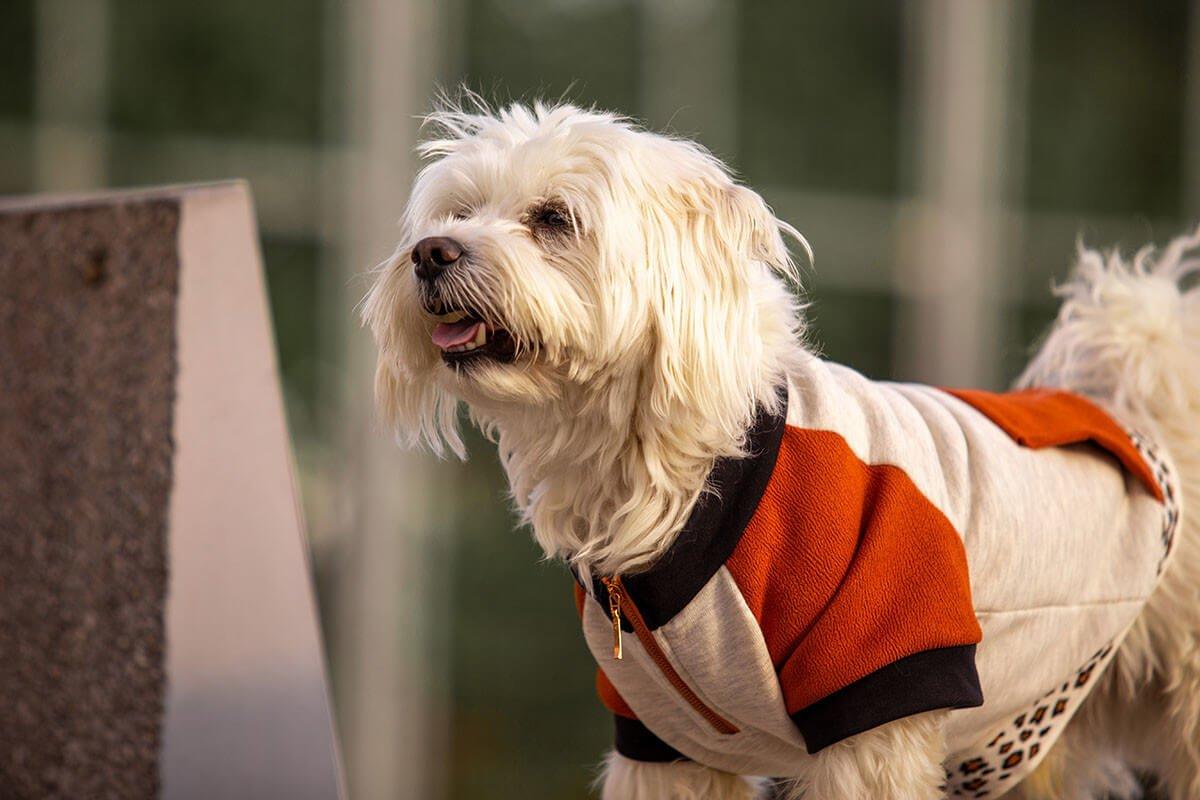 Oblačilo za pse Pancho maltezan pasja obleka Ris 1