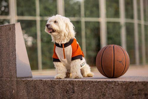 Oblačilo za pse Pancho maltezan pasja obleka Ris