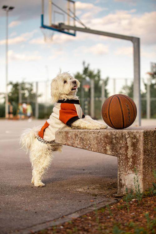 Oblačilo za pse Pancho maltezan pasja obleka Ris 3
