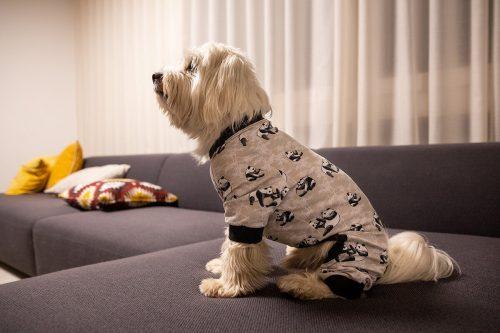 Oblačilo za pse Pancho mesancek pasja obleka Panda
