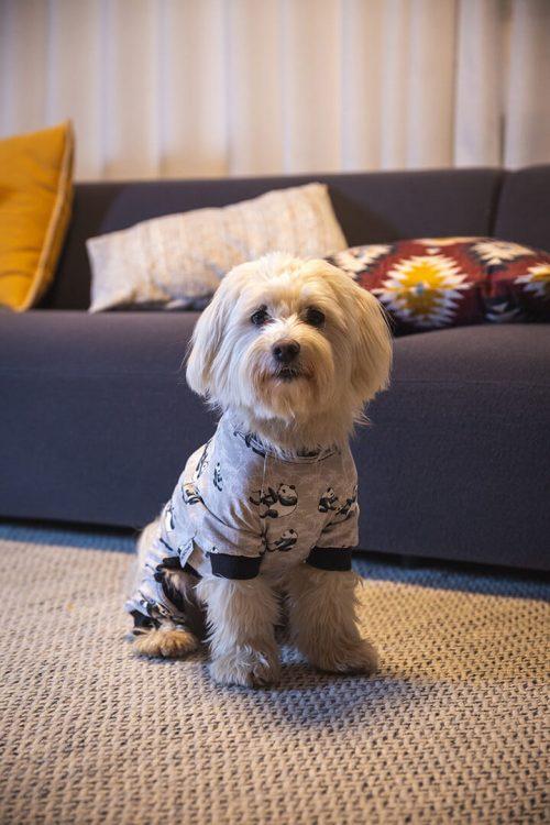 Oblačilo za pse Pancho mesancek pasja obleka Panda 1