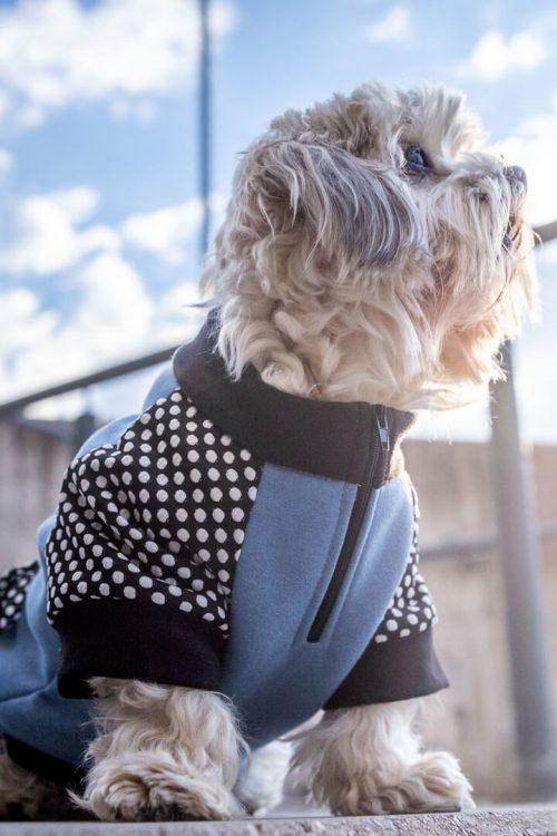 Oblačilo za pse Pancho mesancek pasja obleka Plamenec moder