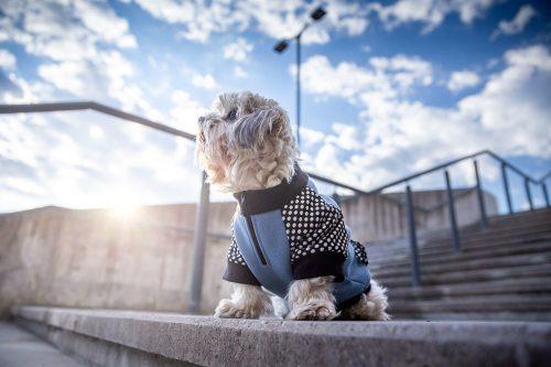 Oblačilo za pse Pancho mesancek pasja obleka Plamenec moder 1
