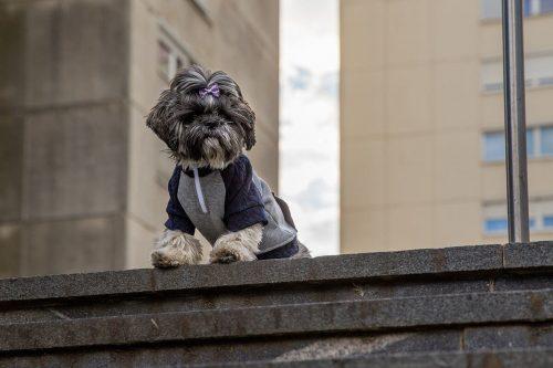 Oblačilo za pse Pancho Shih tzu pasja obleka trenirko