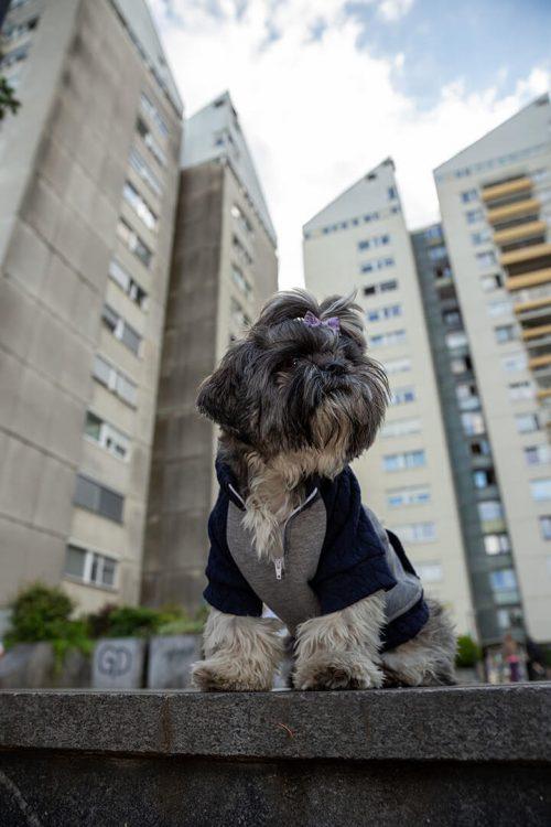 Oblačilo za pse Pancho Shih tzu pasja obleka trenirko 1