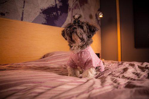 Oblačilo za pse Pancho Shih Tzu pasja obleka pizama Pika roza