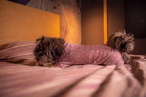 Oblačilo za pse Pancho Shih Tzu pasja obleka pizama Pika roza 2