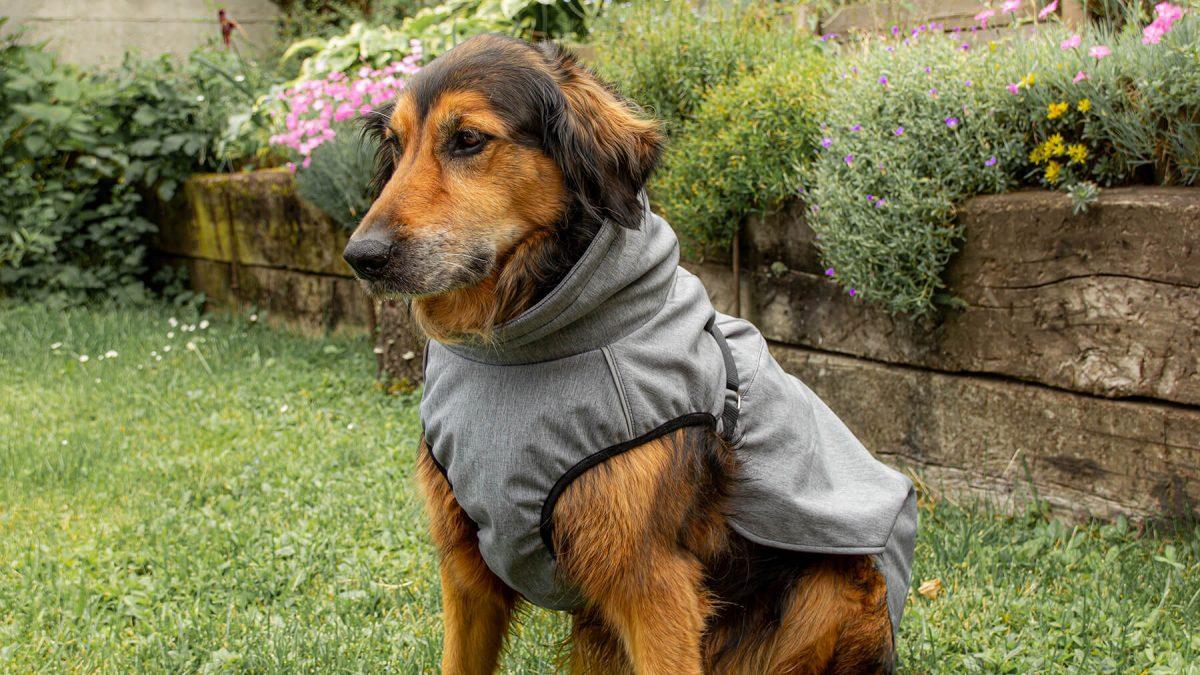 Pancho pasja oblačilo dežni plašč veliki birokrat