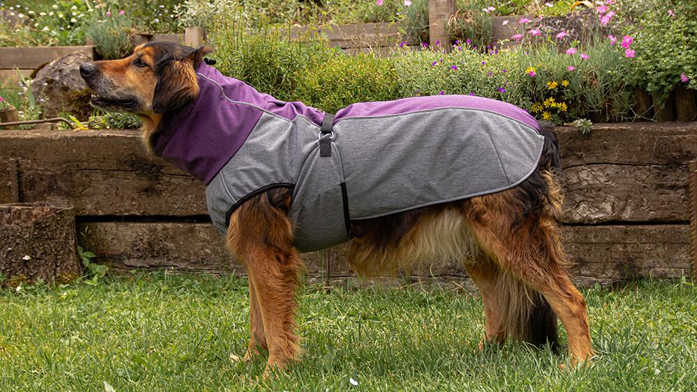 Pancho pasja oblačilo dežni plašč veliki oglaševalec