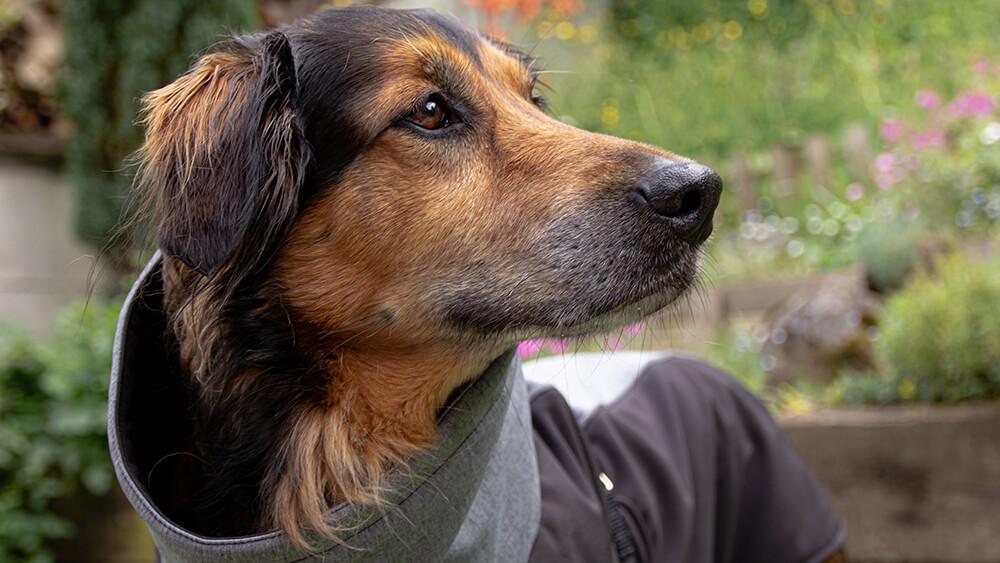 Pancho pasja oblačilo dežni plašč veliki podjetnik