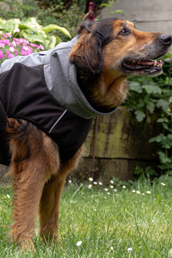 Pancho veliki dežni plašč za pse veliki podjetnik